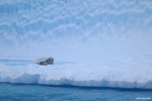iceberg-alley-2