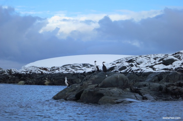 Colored like a penguin. Perched on a rock like a penguin. Not a penguin.