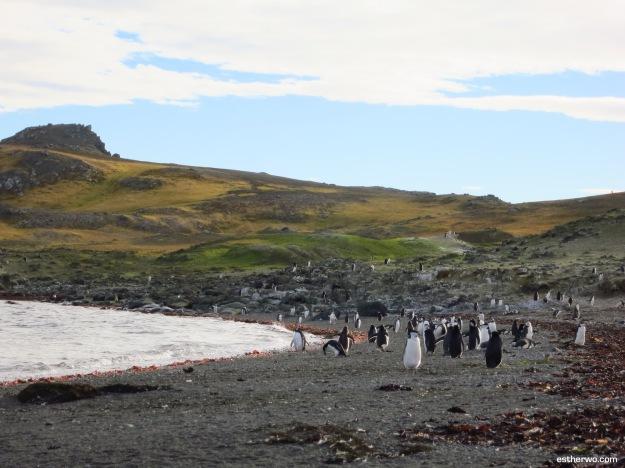 Antarctica-last-2
