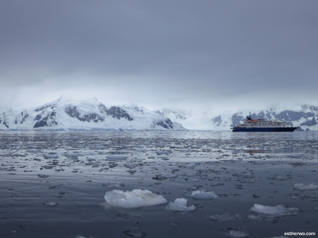 polarplunge-1