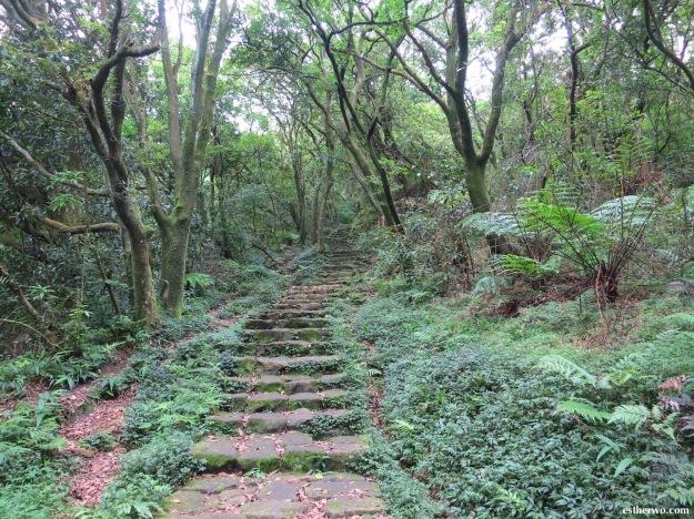 hiking-taiwan-yangmingshan-qixing-09